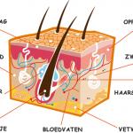Huidverzorging - waarom is dit zo belangrijk?